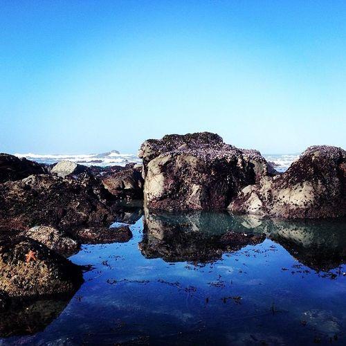 Tidepooling in beautiful Northern California Blue Clear Sky Humboldt Landscape Lifeofamarinebiologis Marineinvertebrate Northern California Outdoors Patrick's Point Seagrass Seastars Tidepool Tidepooling Water