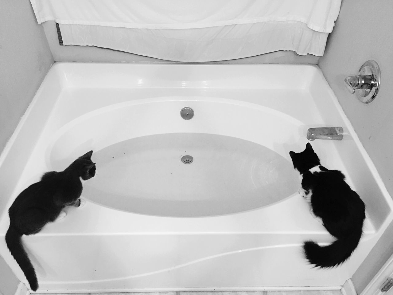 High Angle View Of Cats On Bathtub