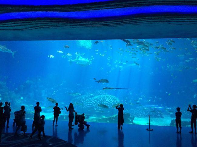 Chimelong Ocean Kingdom Aquarium china China Zhuhai Chimelong Ocean Kingdom Fresh On Eyeem