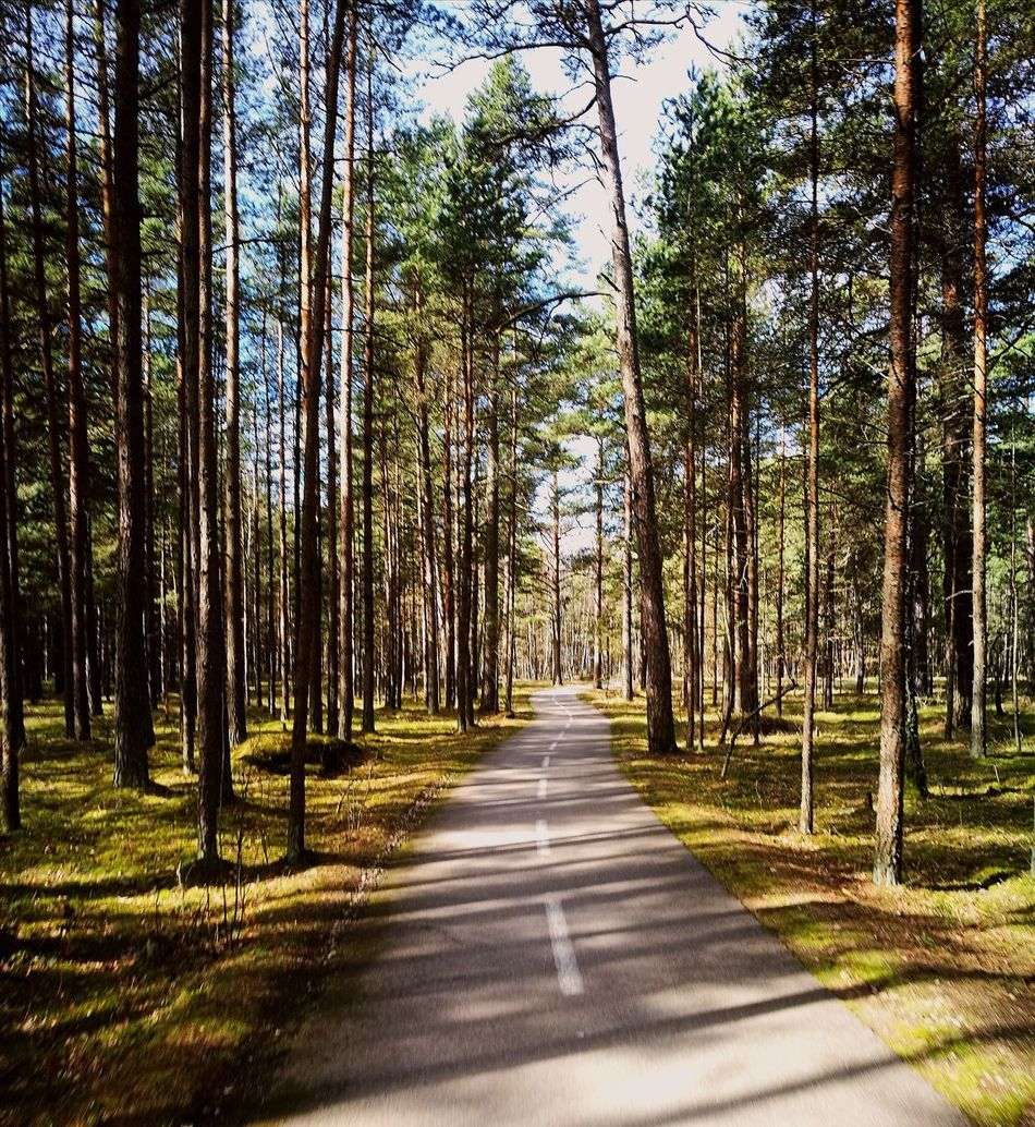 Tree Nature Growth The Way Forward No People Beauty In Nature Outdoors Day Forest Green Color Tranquility Scenics Tranquil Scene