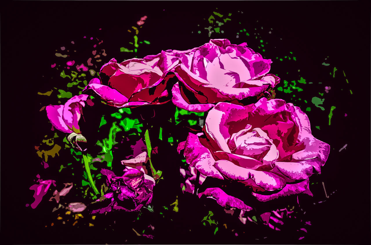 Beauty In Nature Black Background Close-up EyeEm Nature Lover Flower Fragility Freshness Horizontal Klique Klique Maximum Edit Nature No People Posterized Roses Samsungphotography Sick Edit