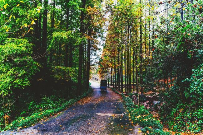 Autumn road My Street Photography My Traveling Photography From My Point Of View Tree Forest The Way Forward Non-urban Scene WoodLand Narrow Autumn Road Narrow Road Peace And Quiet Beauty In Nature Green Color TukTuk Scenics No People Exceptional Photographs