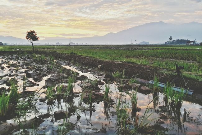Steph Filter Landscape Soreang