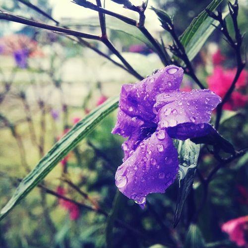 Rainy day Flower Rain Nature Taking Photos