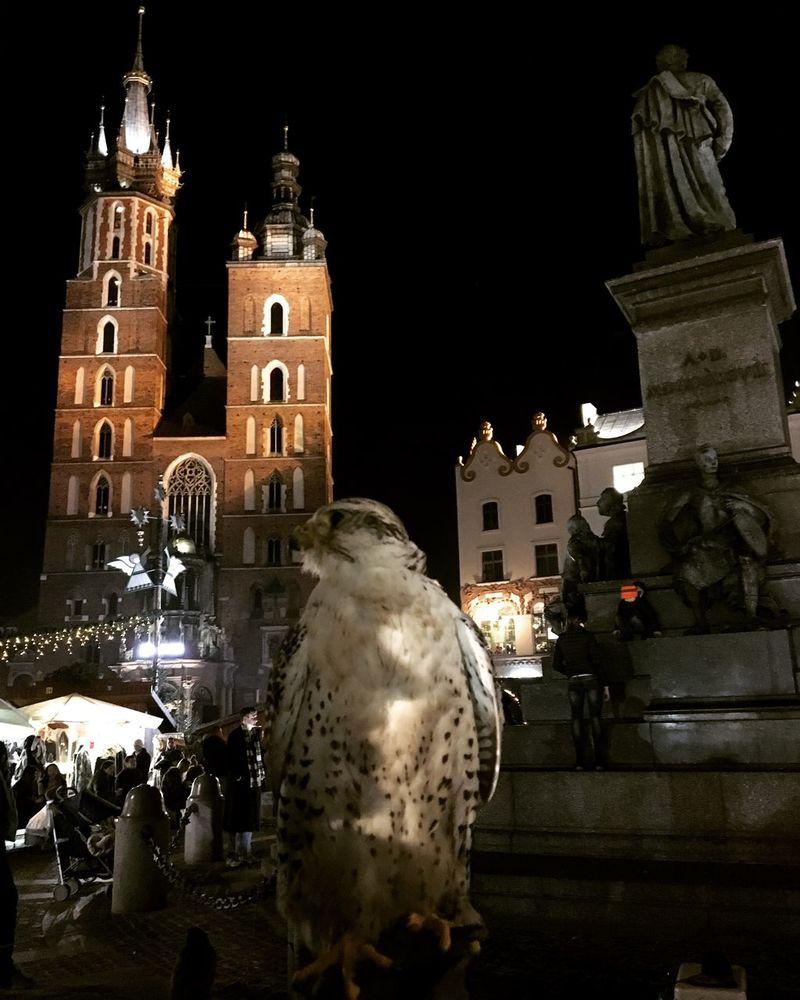 Krakow Marketsquare Bird Kosciolmariacki Adam Mickiewicz Cracow