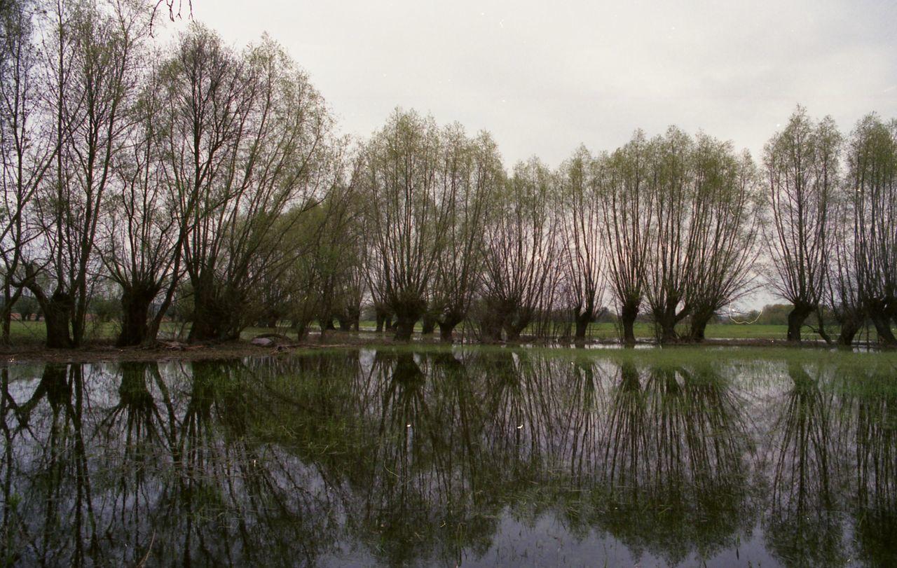 Beautiful stock photos of baum, water, lake, tree, reflection