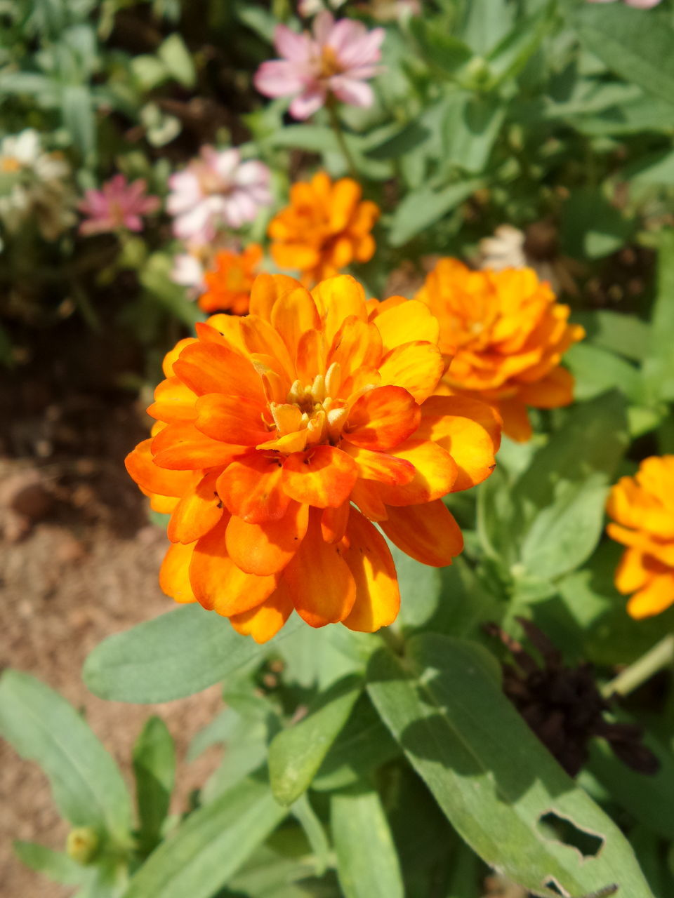 flower, petal, beauty in nature, nature, fragility, freshness, flower head, growth, plant, orange color, blooming, no people, day, outdoors, yellow, close-up, marigold