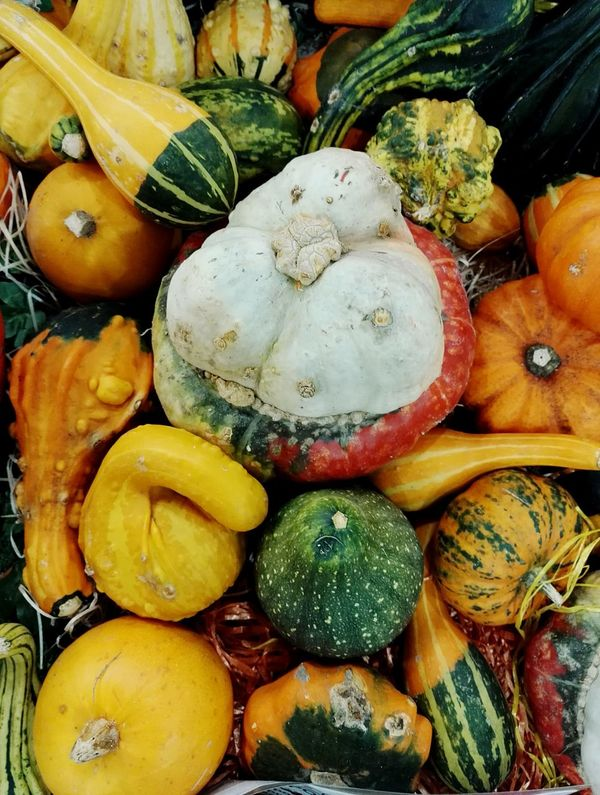 Photography Food And Drink Healthy Eating Freshness Pumpkin Pumpkin!Pumpkin! Pumpkin Soup Pumpkin Season Pumpkin Carving Colourful Fooddecoration Kitchendecor