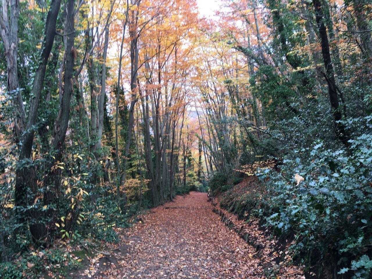 La Fageda Autumn Garrotxa Fageda D'en Jorda Fageda Catalunyaexperience Catalunya