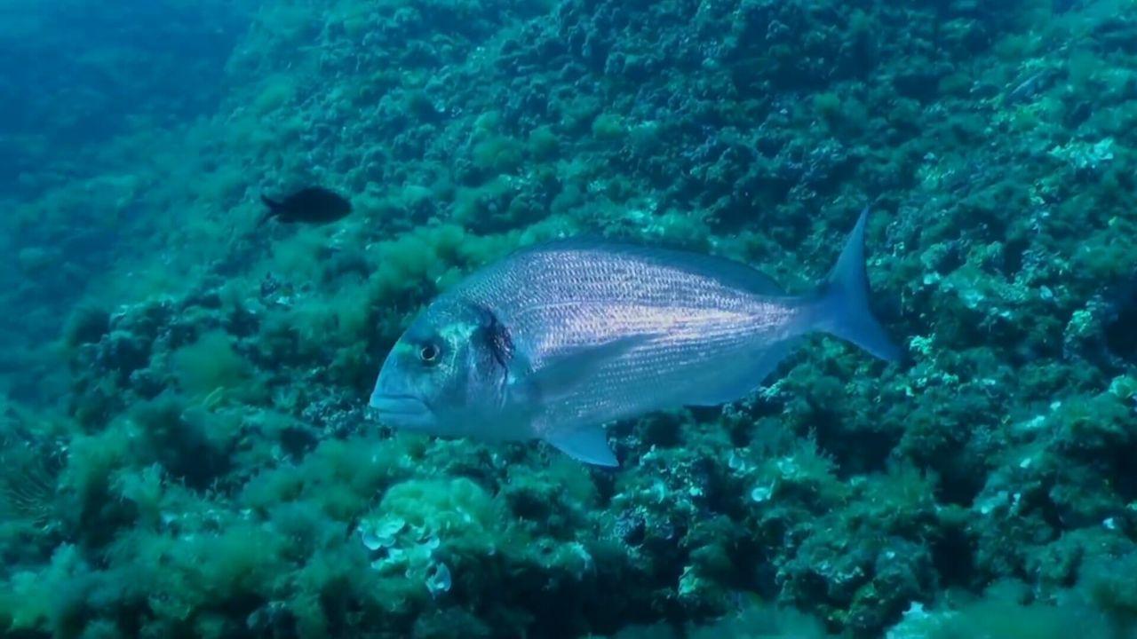 Sealife Biology No People Nature Underwater Diving Underwater Sea Life Fish Animal Themes UnderSea Submarine World Seascape Beautiful Nature Beauty In Nature Animal Wildlife