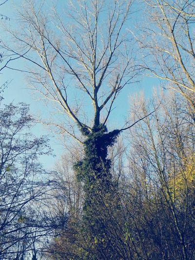Baum 🌳🌲 Ein Baum For The Love Of Trees ~ Tree Porn Treetastic