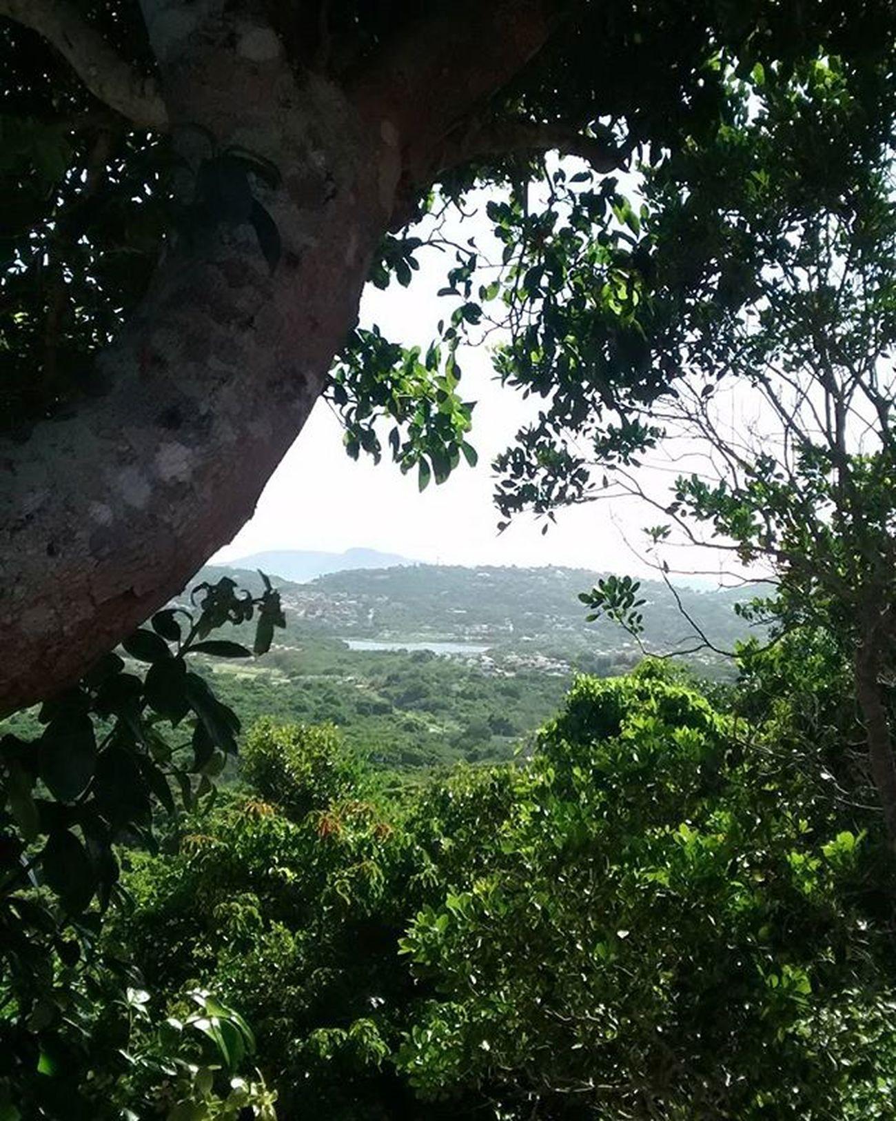 Viva o verde! Green Verde Nature Natureza Naturaleza Naturale Arvore Arboles Alberi Tree Buzios Buziosrj Riodejaneiro Rj40graus Brasil Brazil Semfiltro
