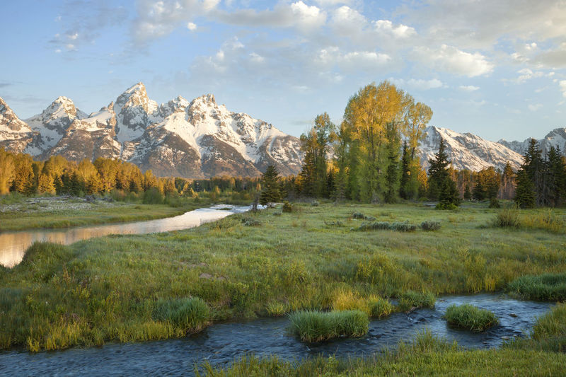 Snowcapped Grand Teton mountains above river in Wyoming Aspen Beauty In Nature Grand Tetons Grand Tetons National Park Majestic Mountain Mountain Range No People Pine Tree River Rockies Tranquil Scene USA West Wyoming