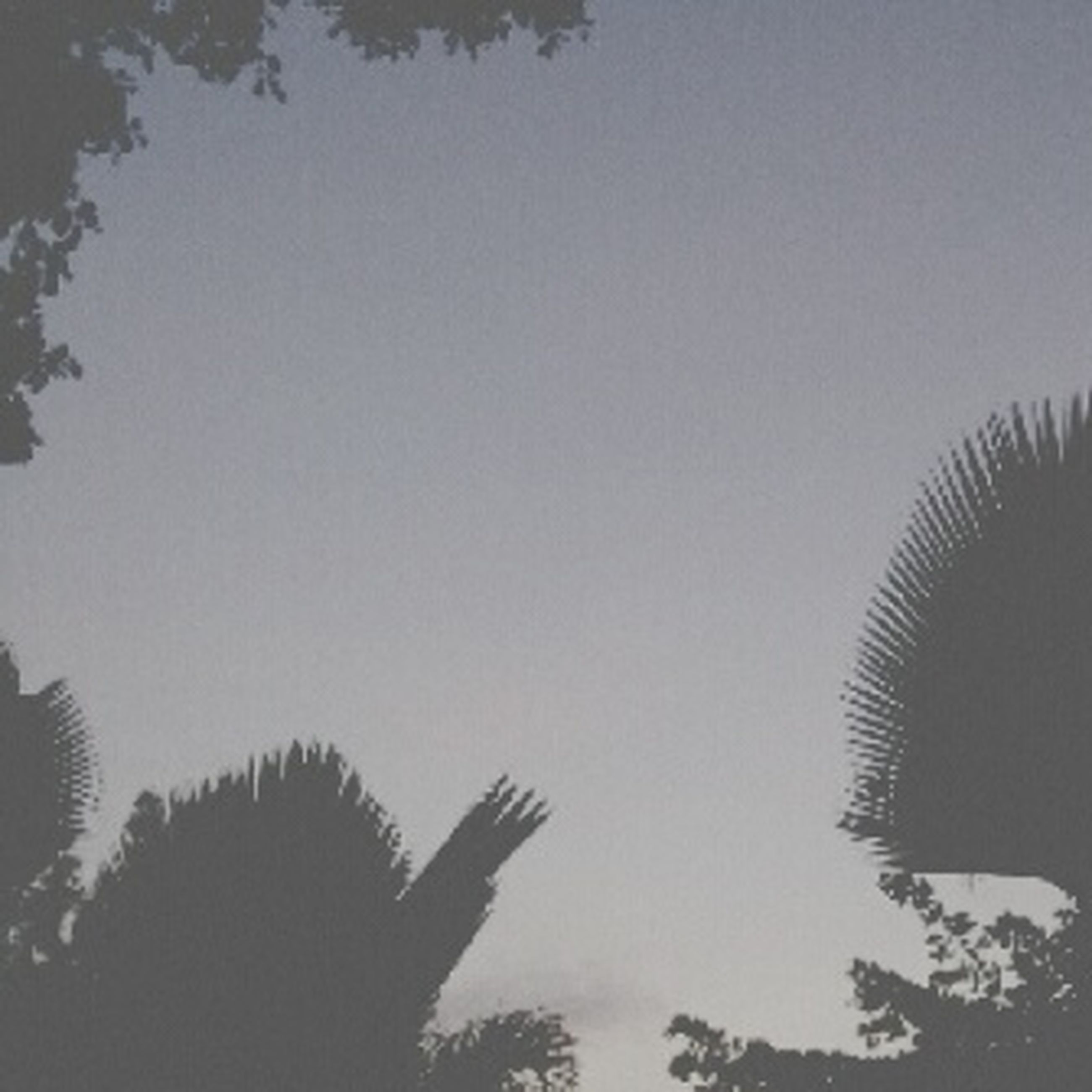 low angle view, tree, silhouette, clear sky, growth, sky, nature, copy space, beauty in nature, tranquility, palm tree, sunset, branch, dusk, high section, no people, outdoors, scenics, tranquil scene, day