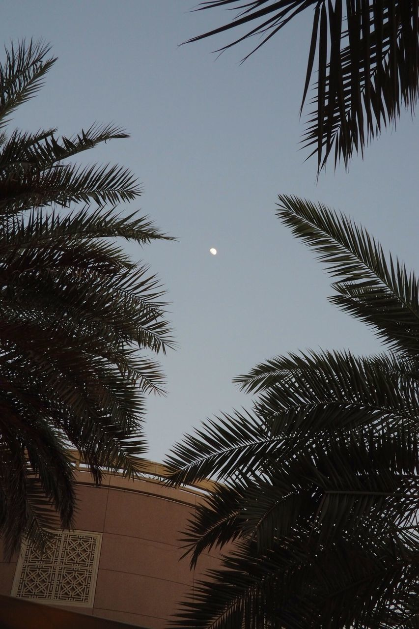 low angle view, moon, night, no people, architecture, outdoors, sky, palm tree, nature, building exterior, tree, beauty in nature