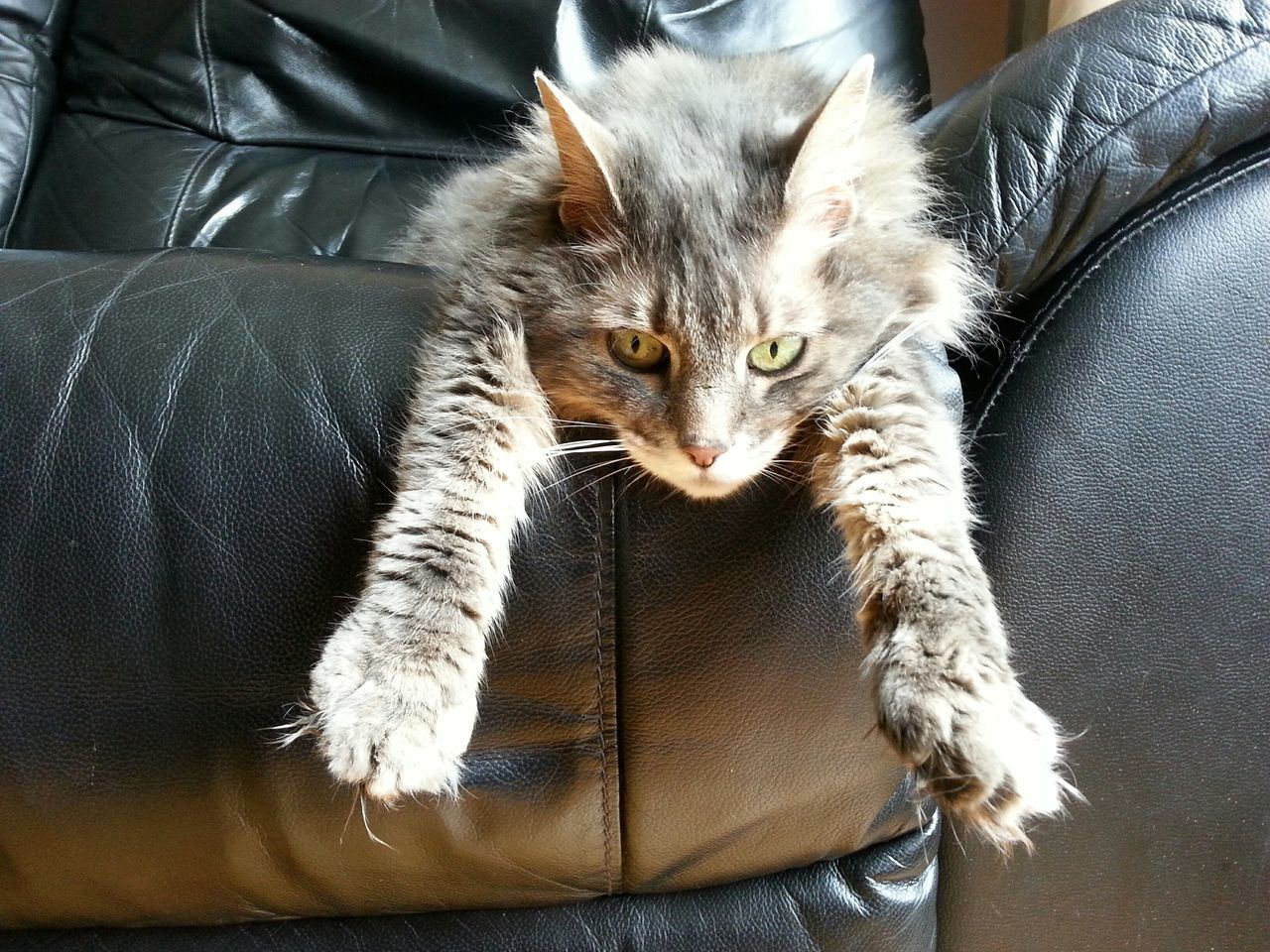 High Angle View Of Cat Stretching On Sofa