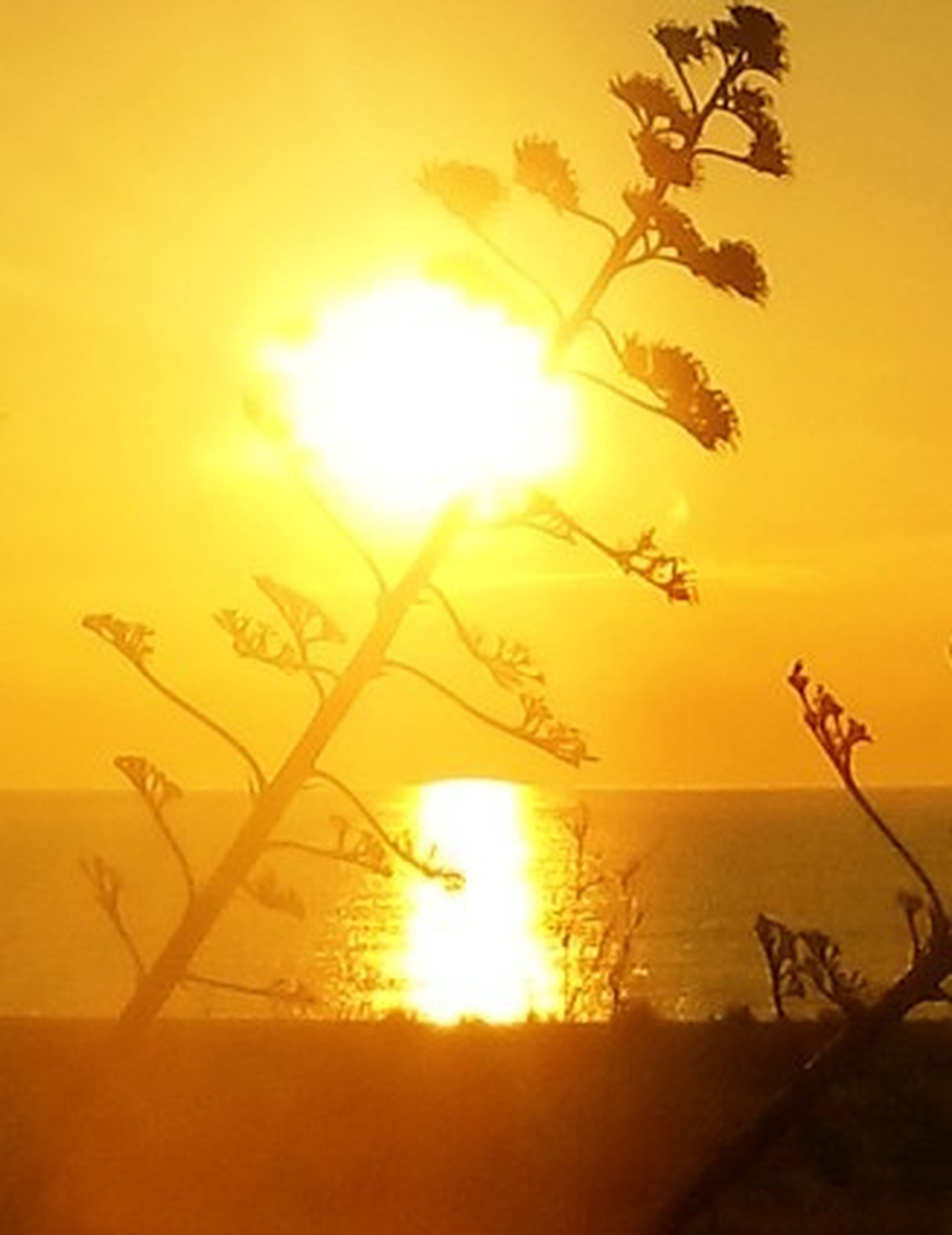 sun, sunset, sunlight, orange color, scenics, beauty in nature, tranquility, tranquil scene, nature, sky, lens flare, water, sunbeam, sea, silhouette, horizon over water, idyllic, tree, branch, reflection
