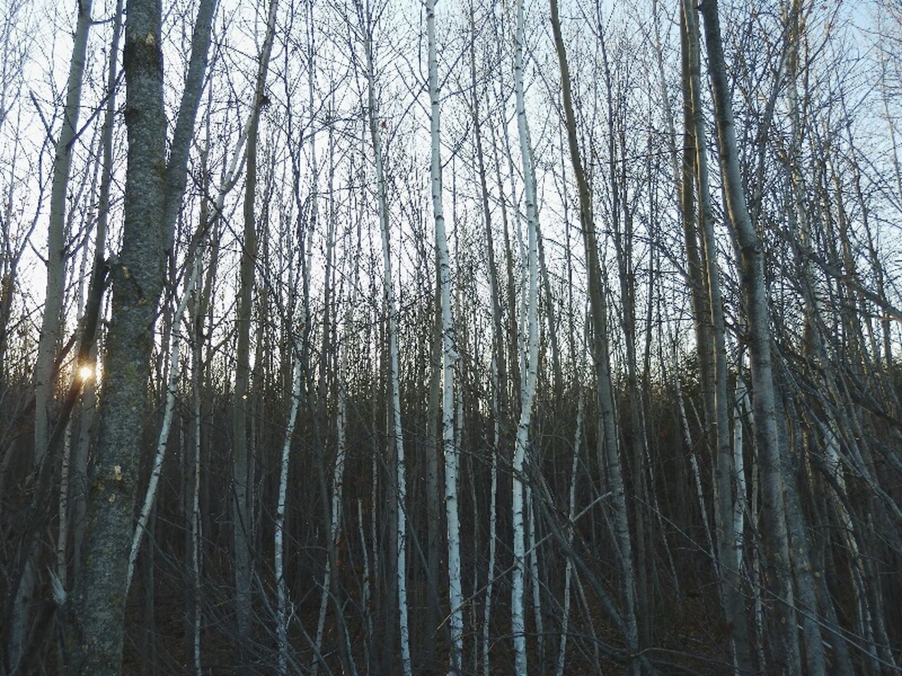 Tree Forest Nature No People Outdoors Beauty In Nature WoodLand