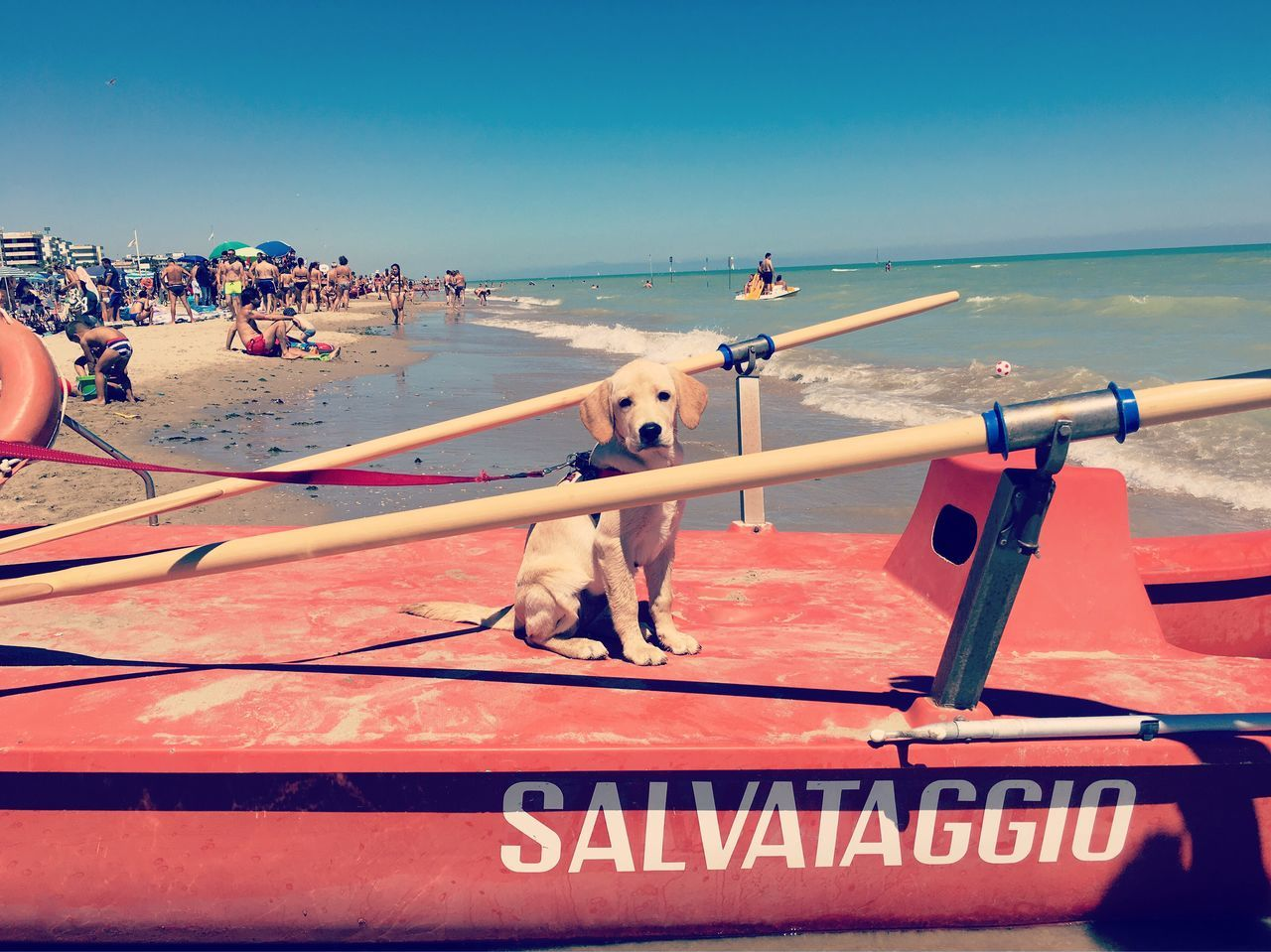 domestic animals, mammal, animal themes, outdoors, dog, one animal, sea, large group of people, pets, clear sky, day, beach, nature, sky, water, real people, nautical vessel, people