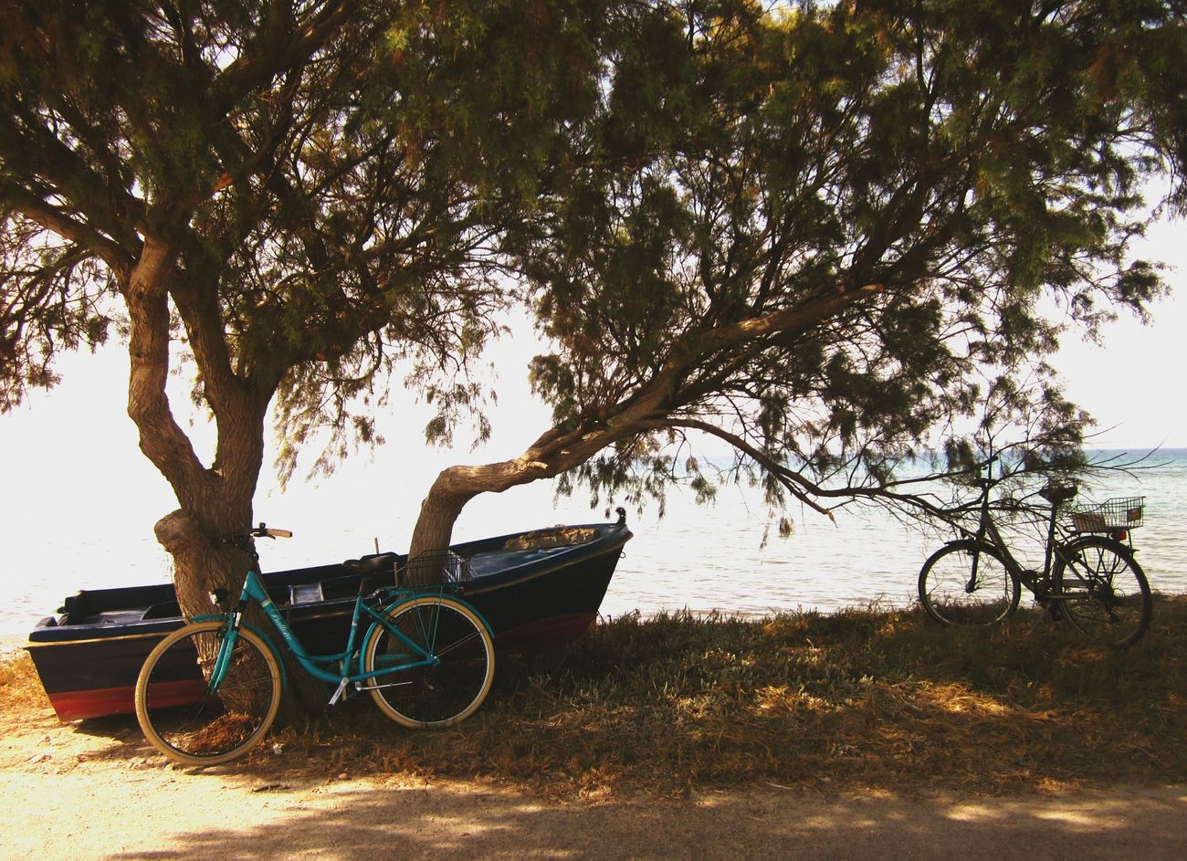 🇬🇷 CyclingUnites The Calmness Within The Color Of Sport Bike Tour Bicycle Trip Have A Break By The Sea Seascape Seaside Along The Coastline Beach View Kos, Greece Tigaki Greek Summer Interrail2016 Bicycle Huge Tree Great Tree Shadows And Sunlight Summer Vibes Eyeem Photography Landscape_Collection