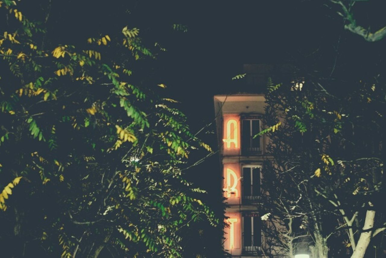 tree, architecture, night, building exterior, built structure, illuminated, outdoors, no people, plant, growth, nature