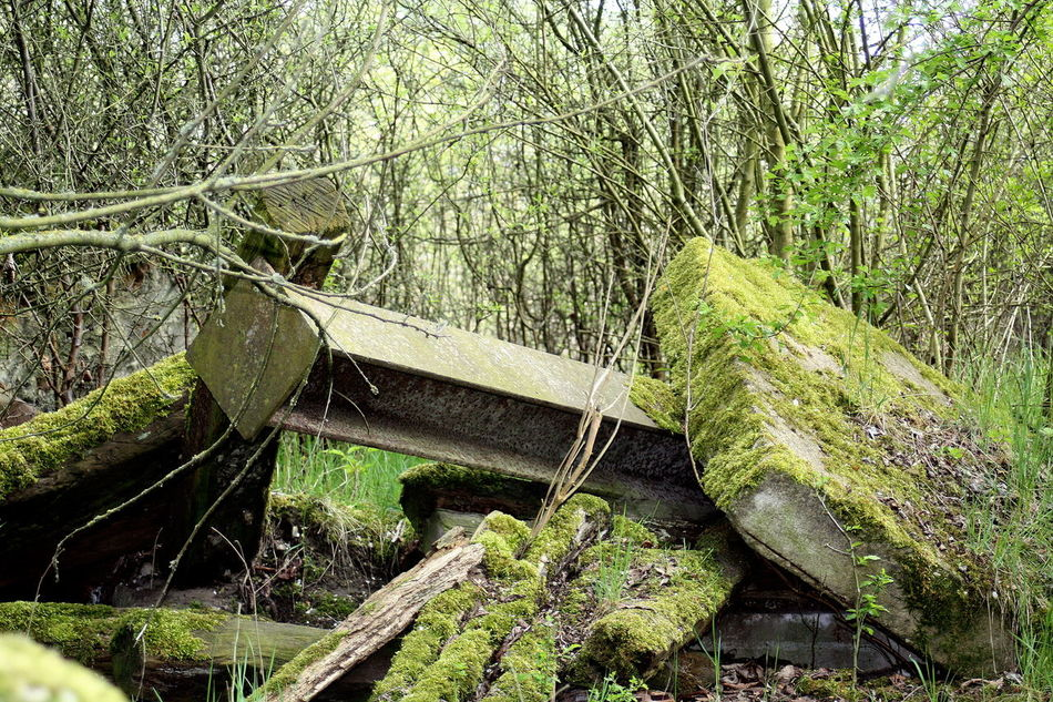 Abandoned Places Branches Concrete Day Forest Green Color Moss Nature No People, Outdoors Stones Trees