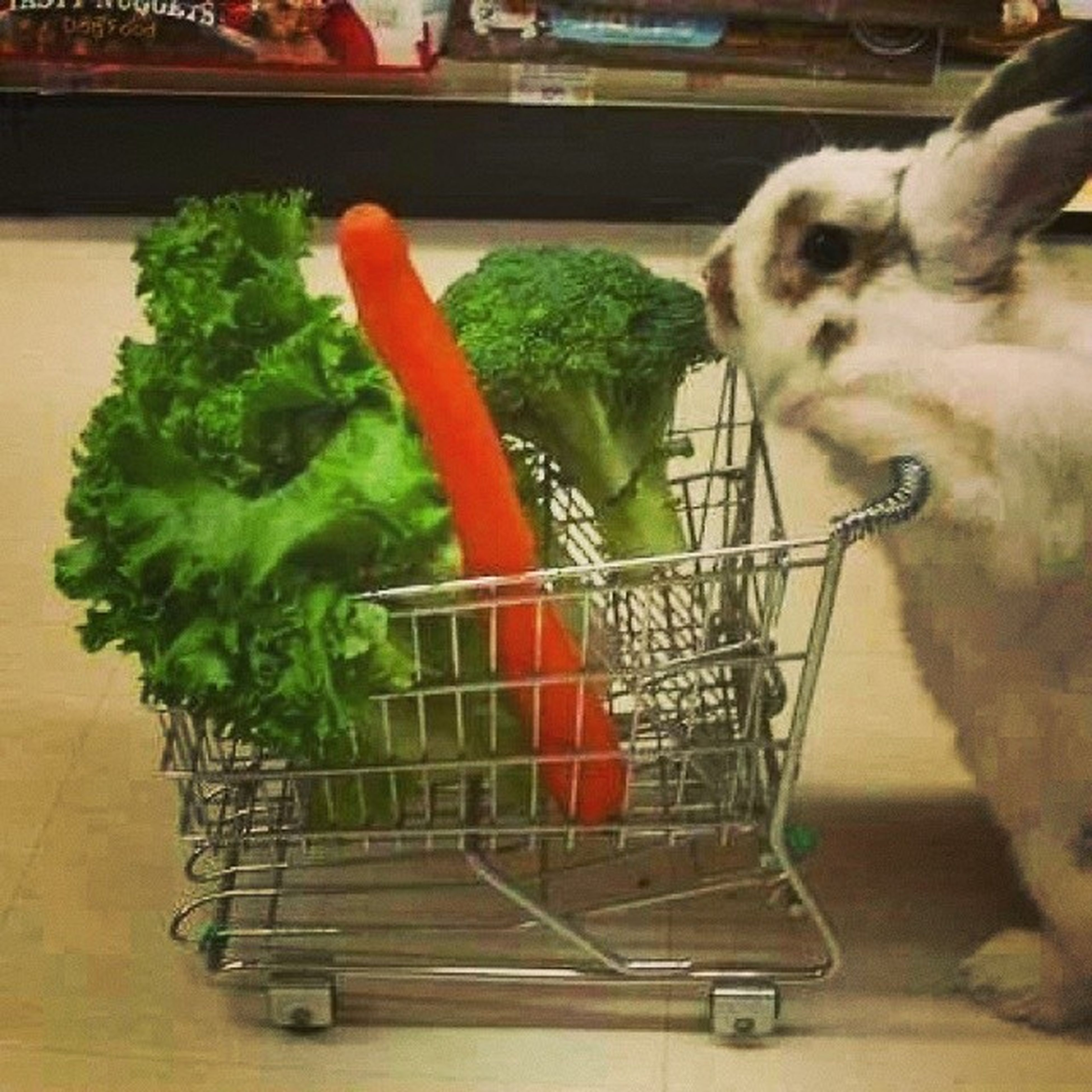 Migros Tansaş Pazar Alışveriş shopping tesco waitrose eataly rabbit animal nature save recycle keep green eat vegetable