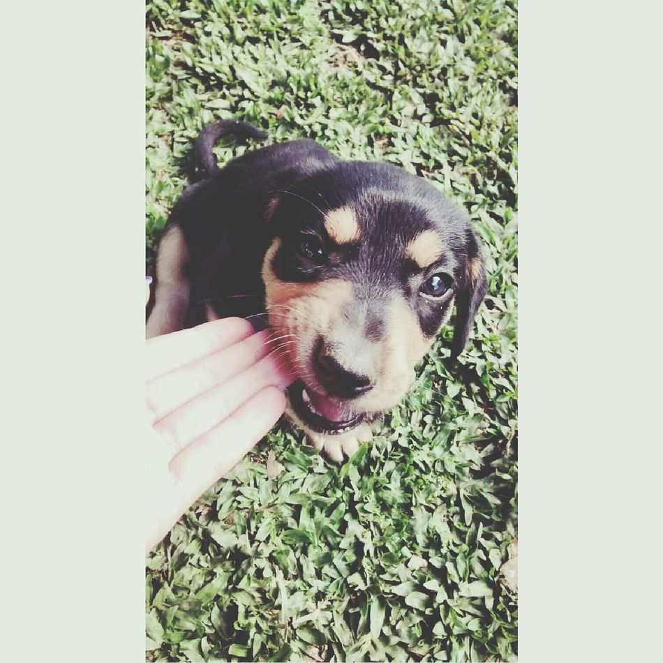 Own pretinho, nao morda meu dedo nao... Hahahah Dog Love