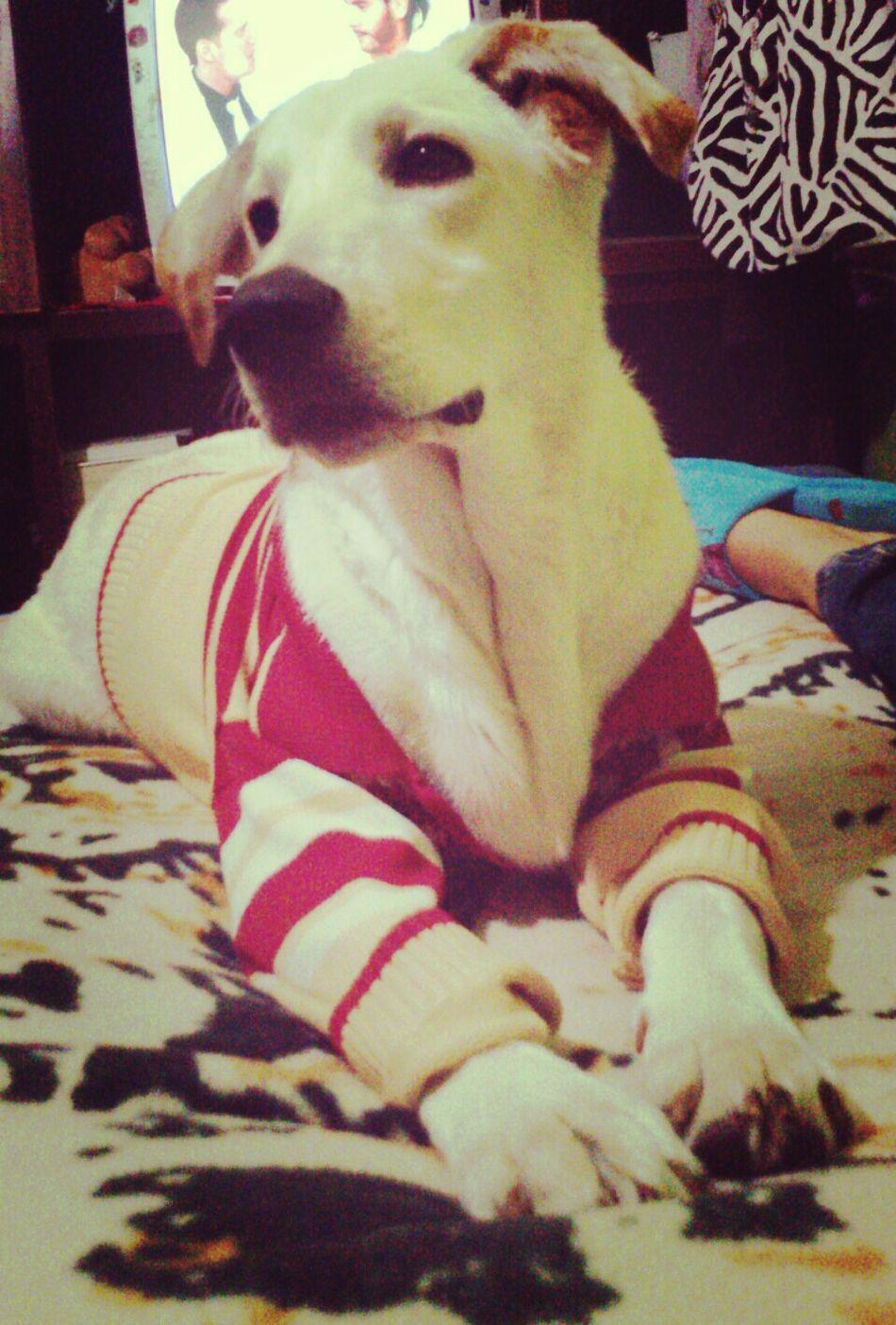 My Dog I Love My Dog He Is Beautiful! Mi Vida Entera  ????