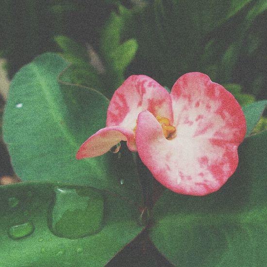 Flowers Flowerporn Flower Collection