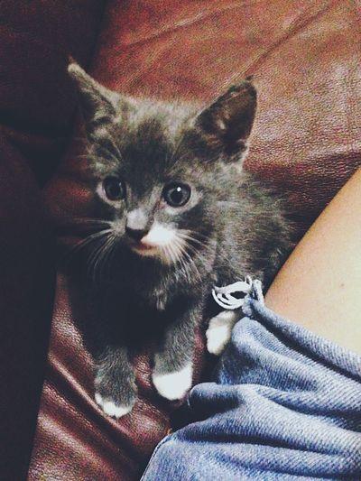 Cat♡ 😻 First Eyeem Photo