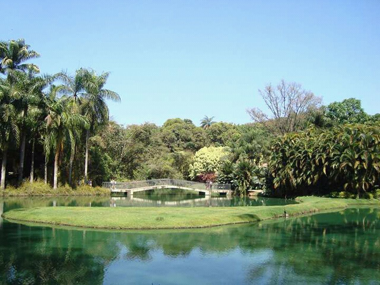tree, palm tree, reflection, water, no people, lake, nature, day, outdoors, clear sky, beauty in nature, scenics, sky, golf course