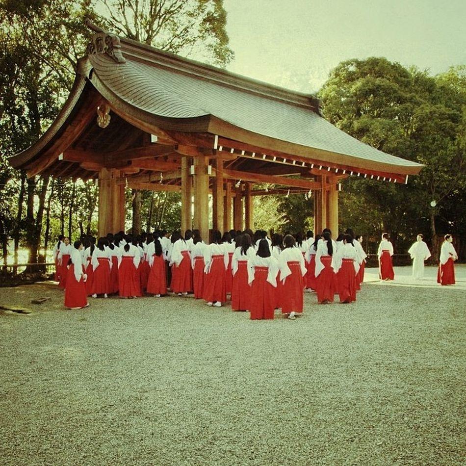 子どもと散歩してたら、巫女さんの集団に遭遇してビックリ。 今日は、初詣に備え、臨時の巫女さんの研修だったようです。 Today, in preparation for New Year's Day, it seems to have been training Miko's extraordinary.Miko is the riestess of Japanese shrine.  巫女 Riestess  神社 Shrine お正月 初詣 研修 japan