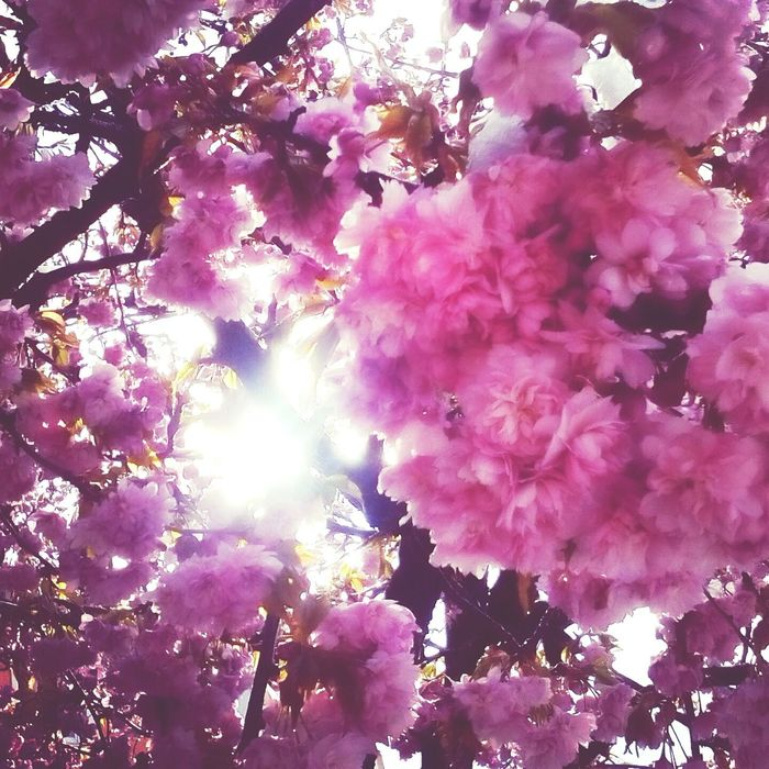 Flowerpower Spring I Will Never Stop Dreaming 🌸🌸🌸