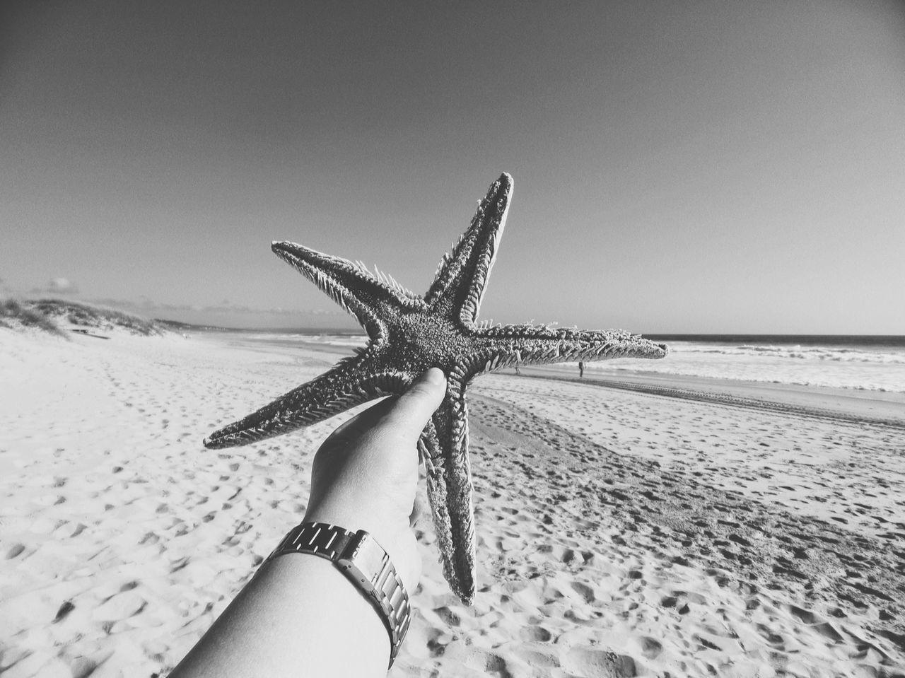 Close-Up Of Hand Holding Starfish On Beach