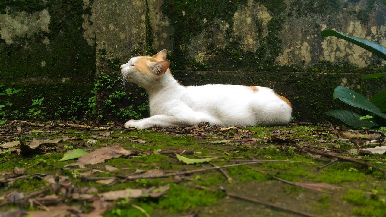domestic animals, pets, animal themes, one animal, mammal, domestic cat, feline, nature, no people, day, outdoors