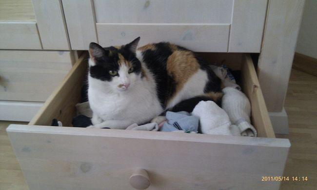 Animal Themes Domestic Animals One Animal Domestic Cat Cat Feline Katze Chat Sleep Dormir Schlafen