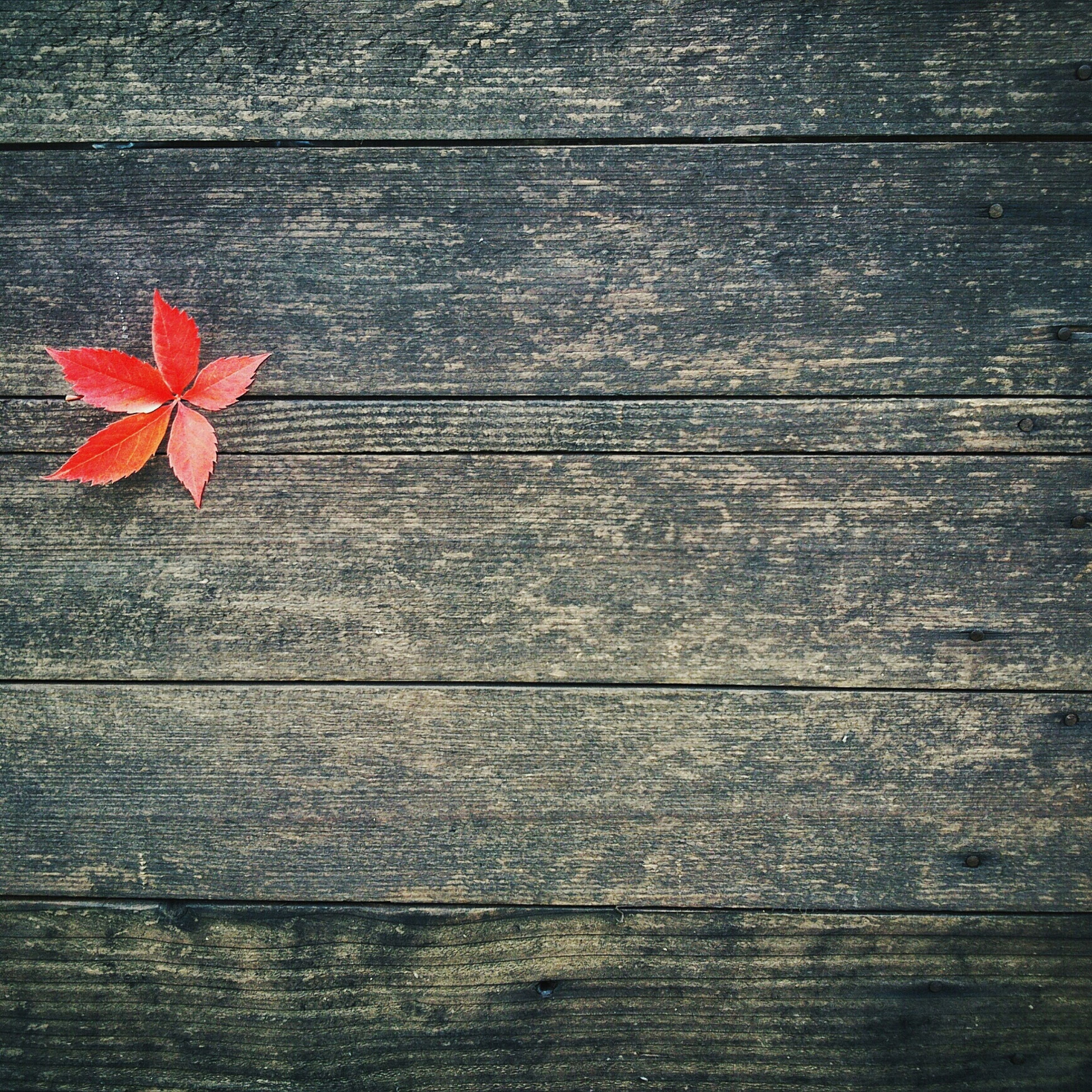 wood - material, wooden, plank, wood, close-up, textured, red, full frame, table, leaf, indoors, high angle view, flower, no people, backgrounds, pattern, directly above, still life, door, day