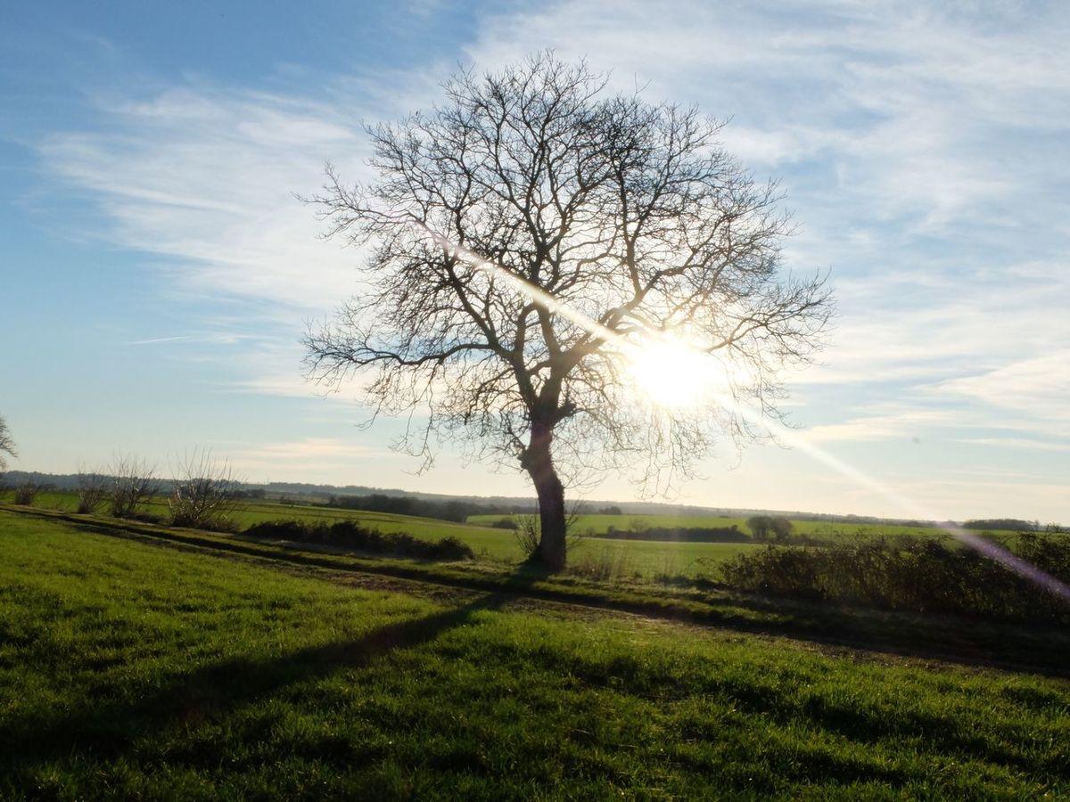 Un arbre en hiver Tree Sun Light And Shadow Light Sunlight Landscape Landscape_Collection Green Nopeople Afternoon Sky Blue