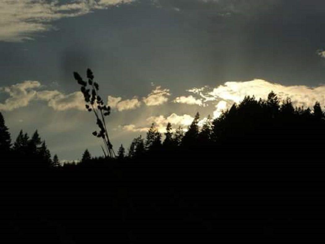 Tree Silhouette Treeline Sunrise Forest Dawn Beginnings Natures Beauty California