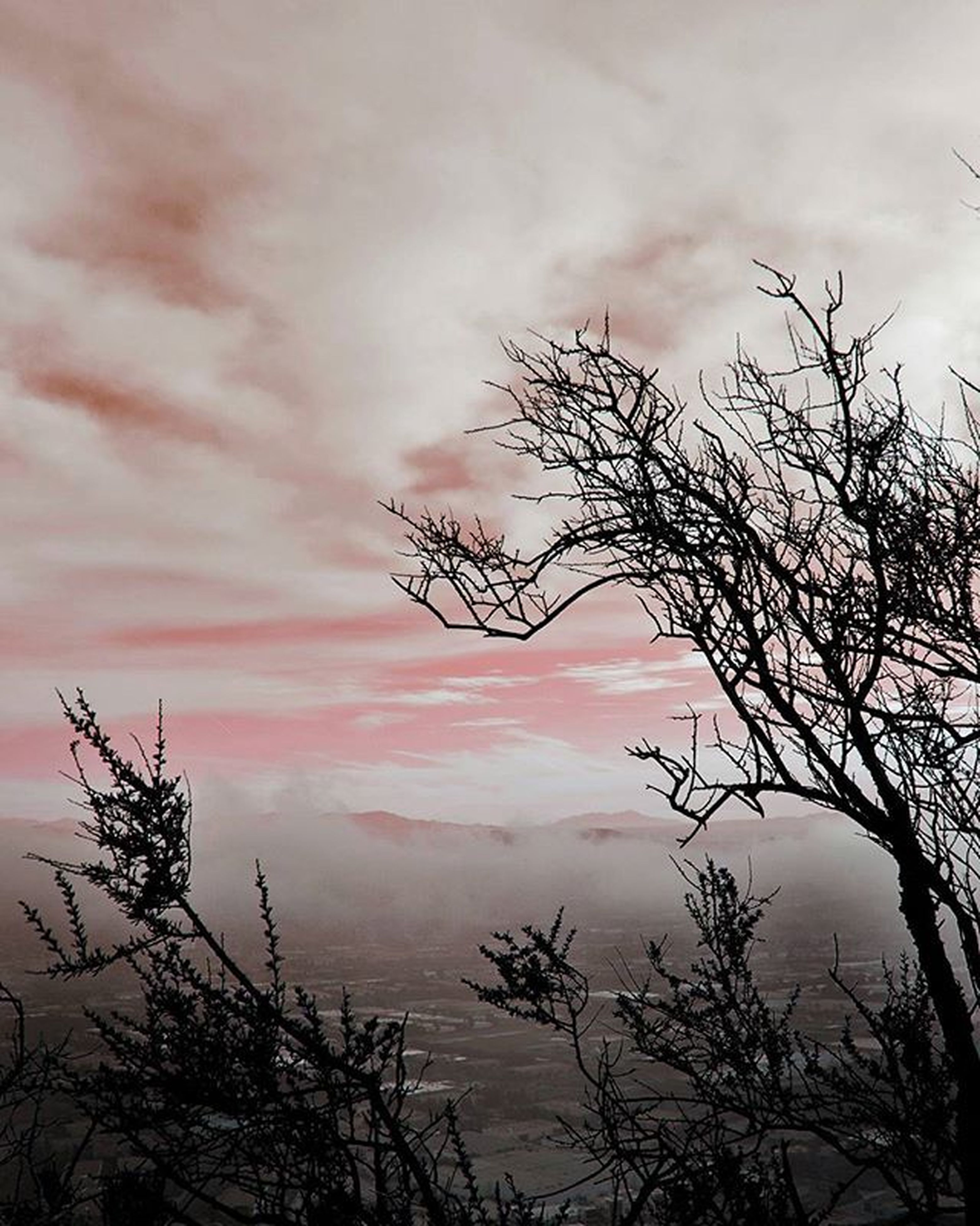 bare tree, sky, silhouette, sunset, cloud - sky, tranquility, cloudy, low angle view, branch, tree, beauty in nature, scenics, tranquil scene, nature, cloud, dusk, weather, dramatic sky, overcast, idyllic