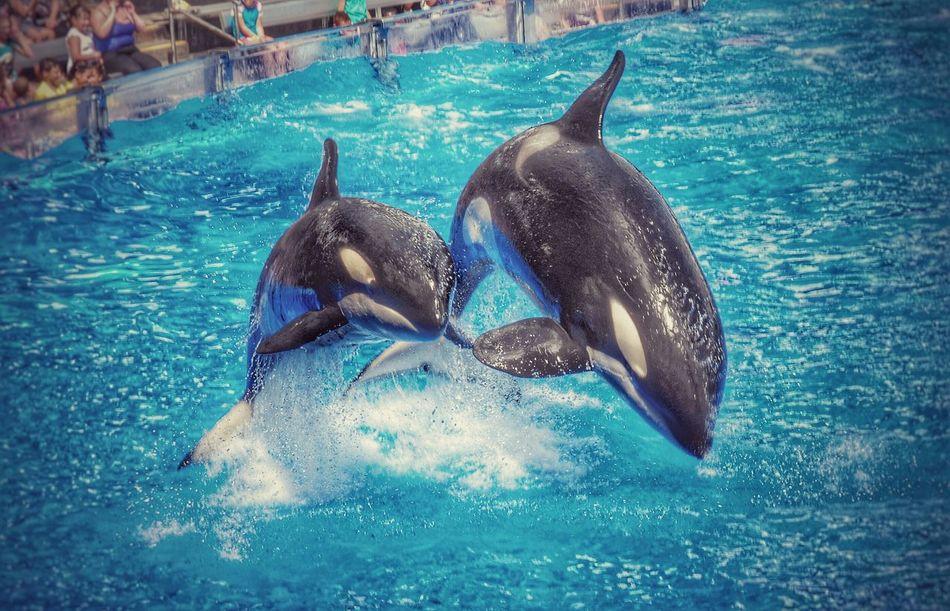 Whales show at sea world, Orlando Whale Sea World First Eyeem Photo