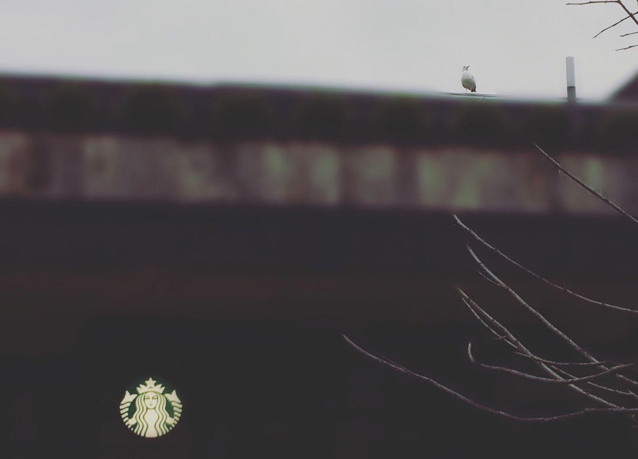 Coffe Hello World