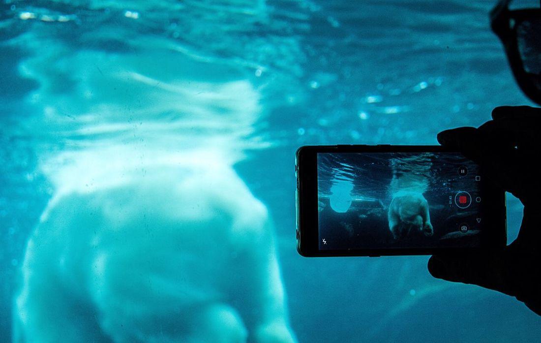 Polar Bear Close-up Mobile Phone Scenery Shots Schönbrunn Zoo Streetphotography Light And Reflection