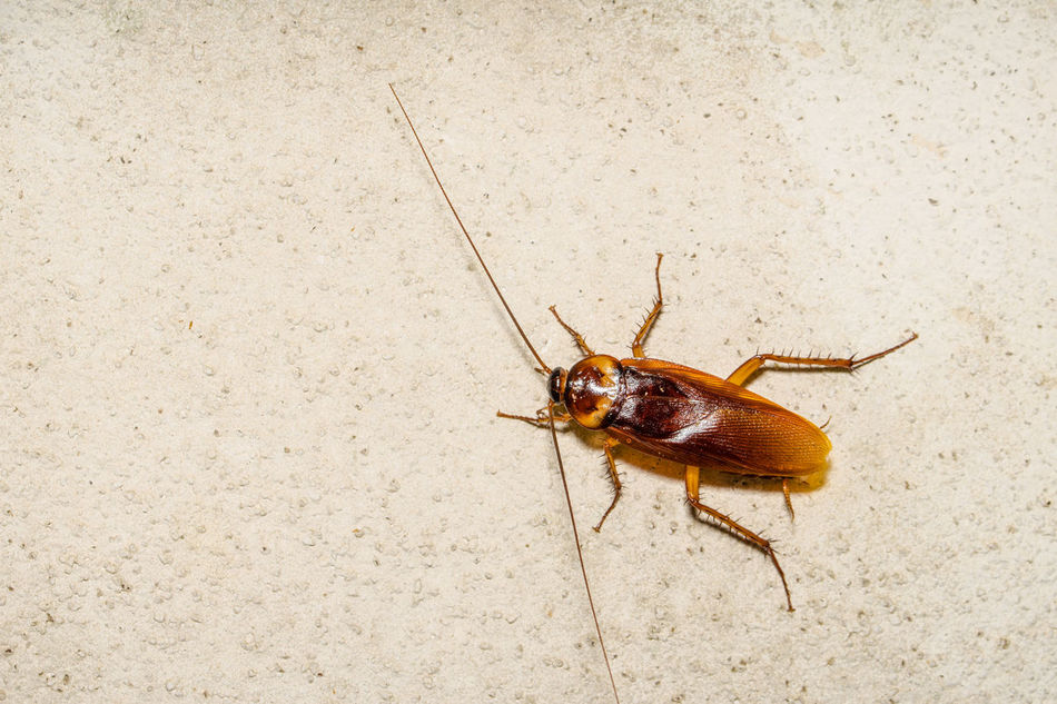 Beautiful stock photos of cockroach, Animal Themes, Animal Wildlife, Animals In The Wild, Cement