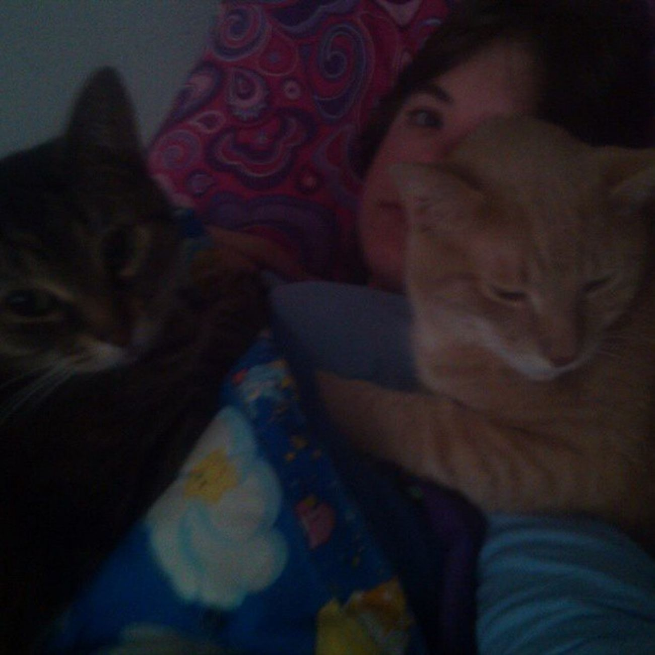 The morning smother has resumed. Meow Snugglebuddy Catlady