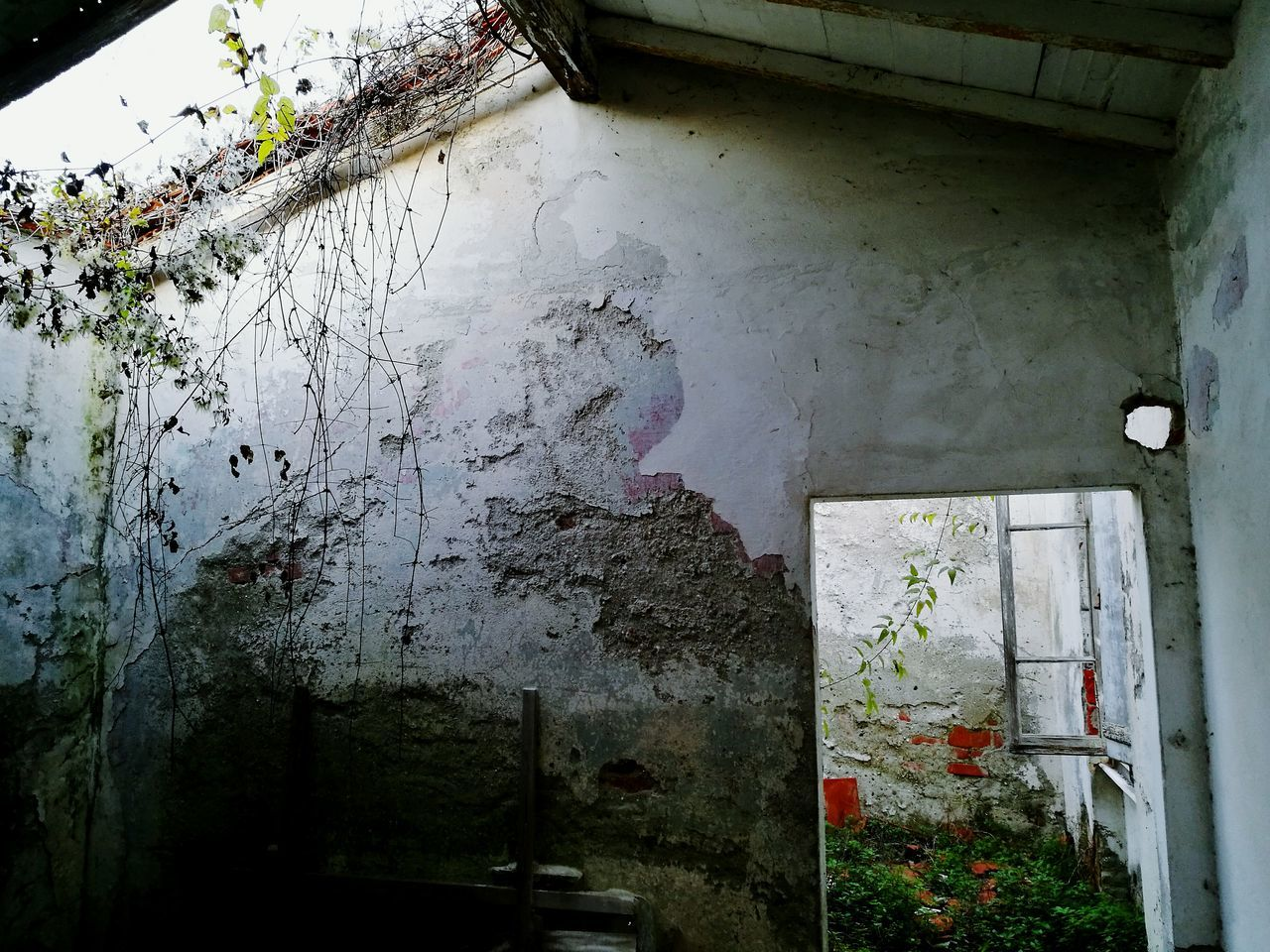 Window Drop No People Damaged Destruction Tree Indoors  Day Water Nature Urbanphotography Desolate Scene Abandoned House