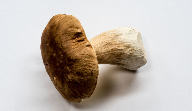 king bolete, Boletus edulis, Steinpilz Close-up Day Food Nature No People Studio Shot White Background