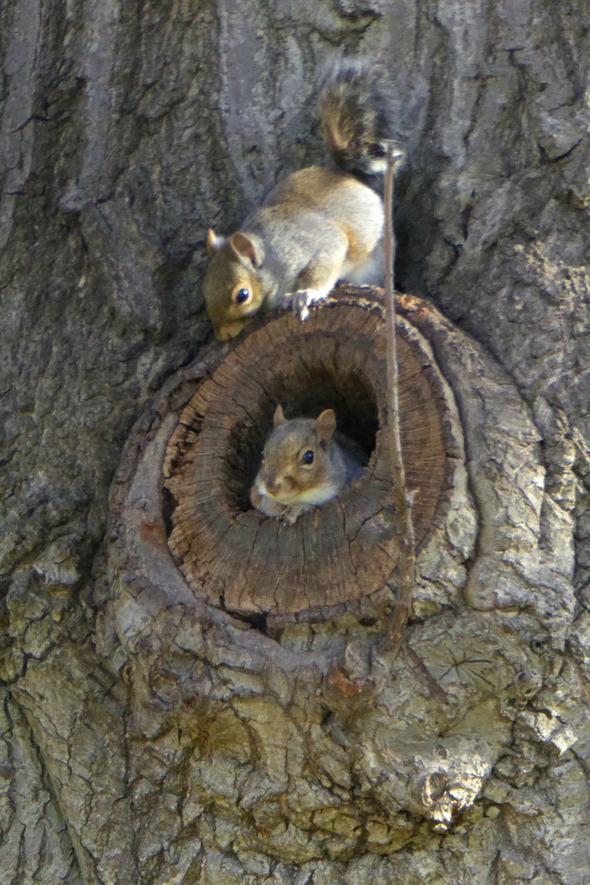 Close-Up Of Squirrels On Tree Trunk