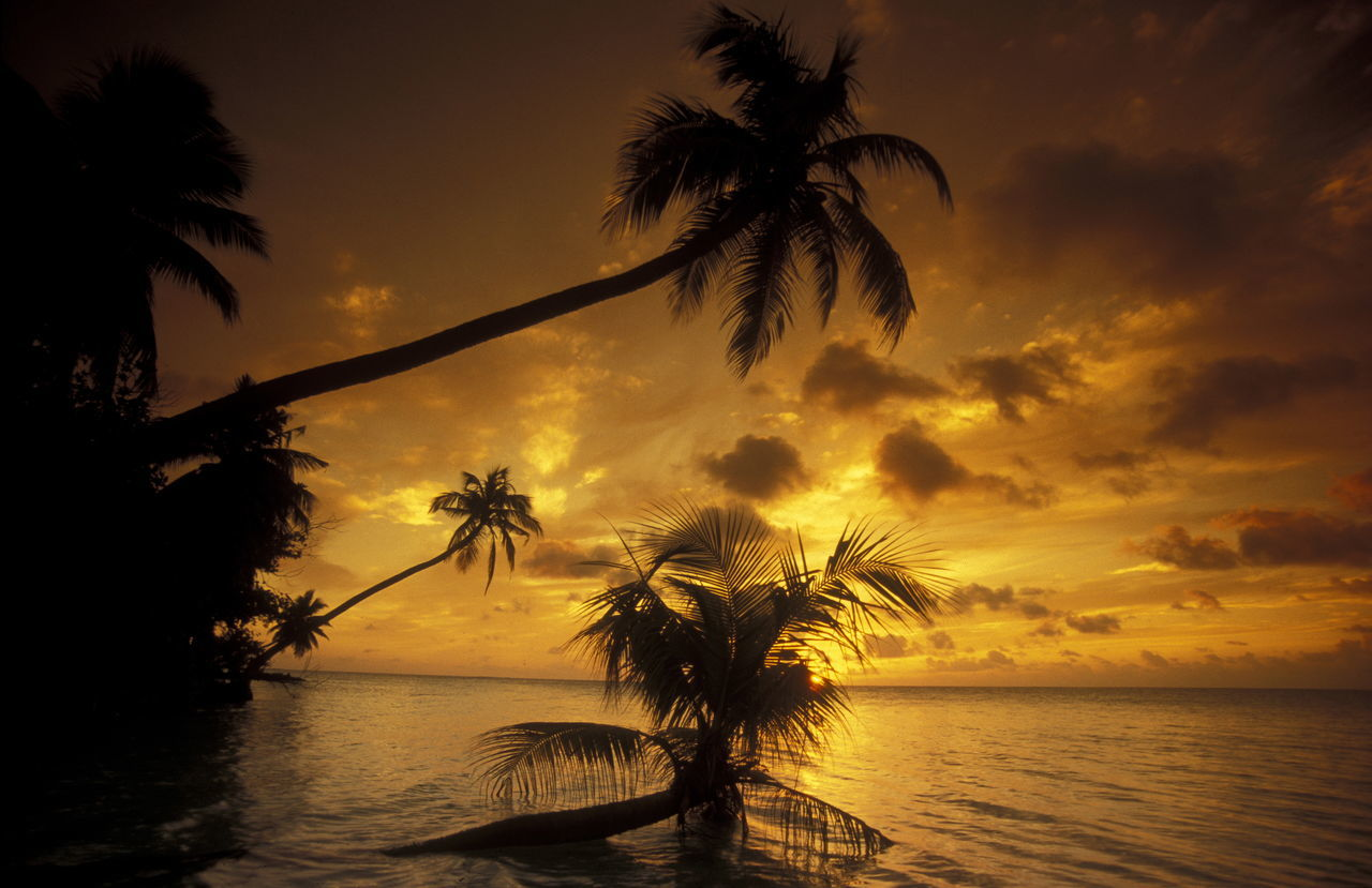 Silhouette Coconut Palm Trees Over Sea Against Cloudy Sky During Sunset
